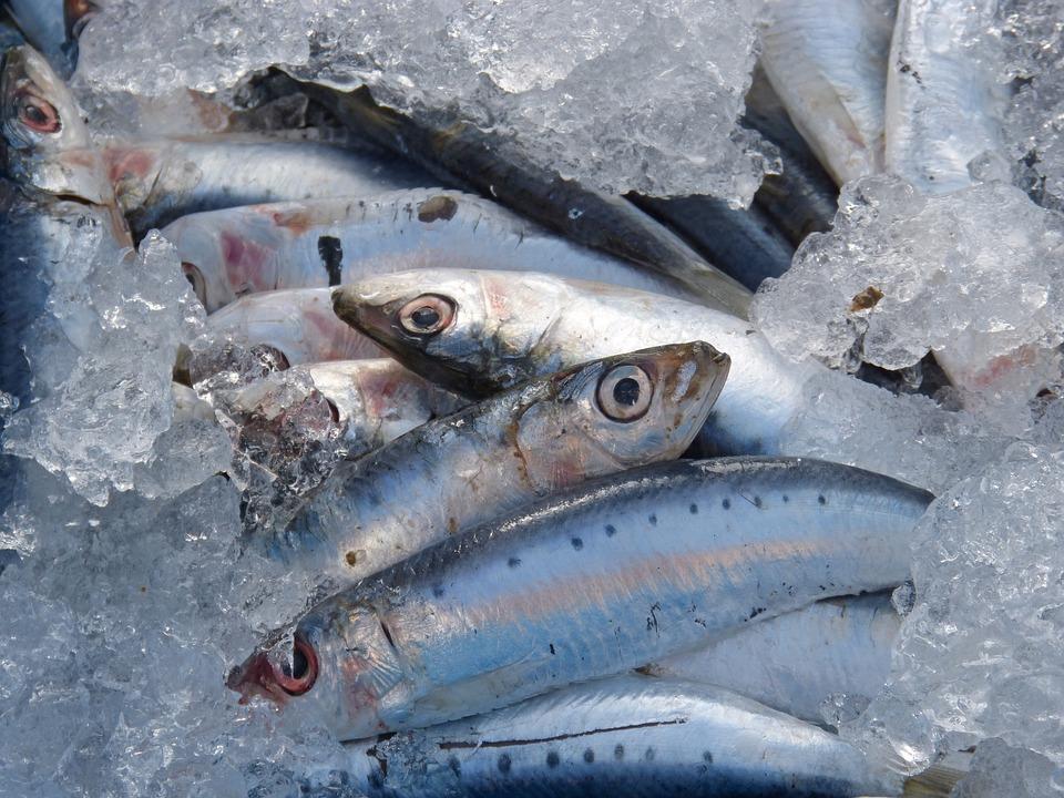 sardines-1106191_960_720